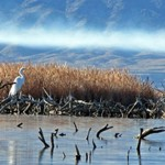 Lake Havasu Wildlife Refuge